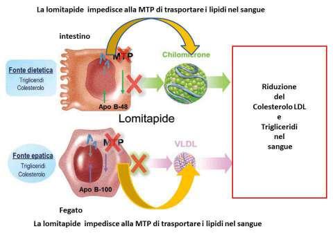 Lomitapide: meccanismo d'azione