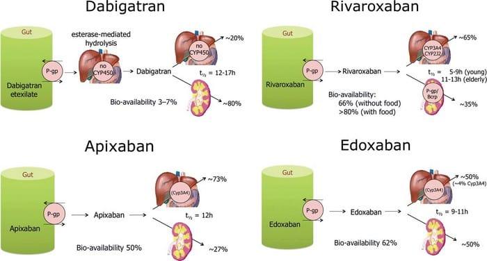 nuovi anticoagulanti orali: eliminazione