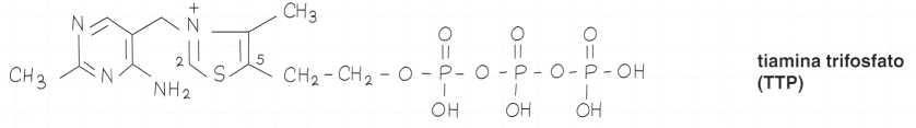 Vitamina B1 o Tiamina: formula di struttura 4