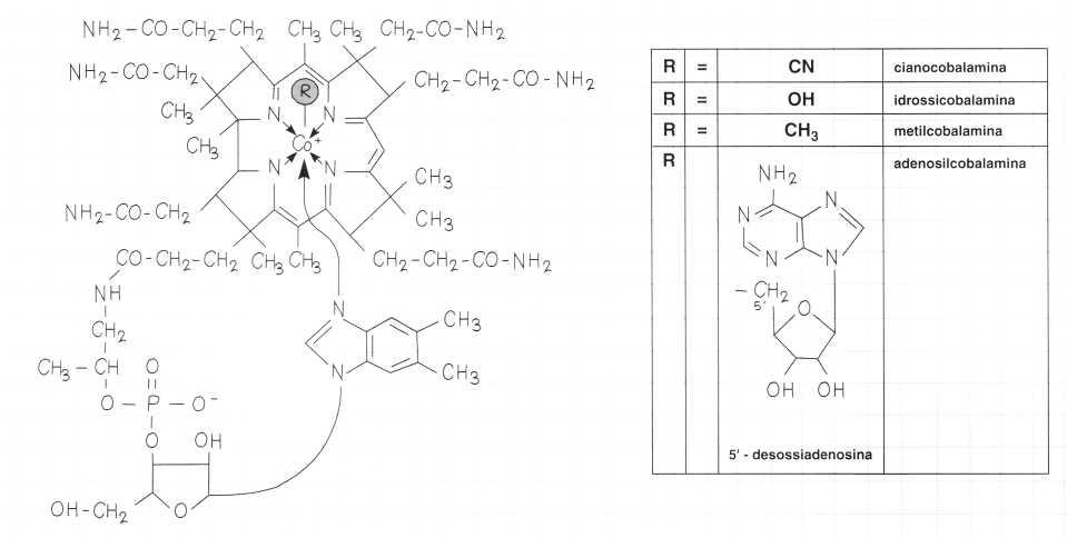 Vitamina B12 o Cobalamina: formule di struttura
