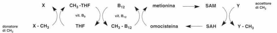 Vitamina B12 o Cobalamina: reazione 10