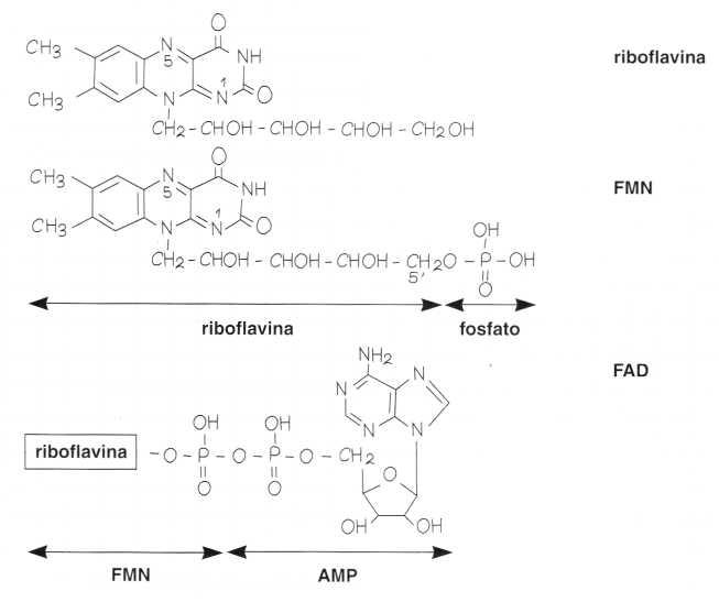 Vitamina B2 o Riboflavina: reazione 1