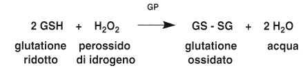 Vitamina B2 o Riboflavina: reazione glutatione 2
