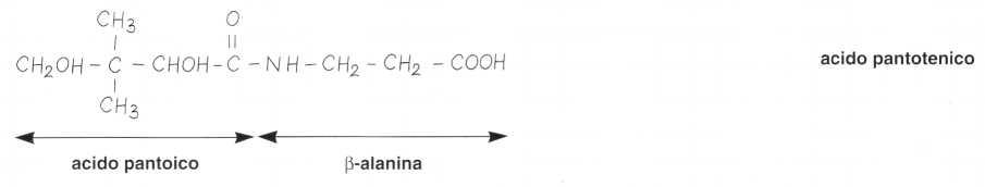 Vitamina B5 o Acido Pantotenico: reazione 1