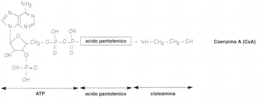 Vitamina B5 o Acido Pantotenico: reazione 3