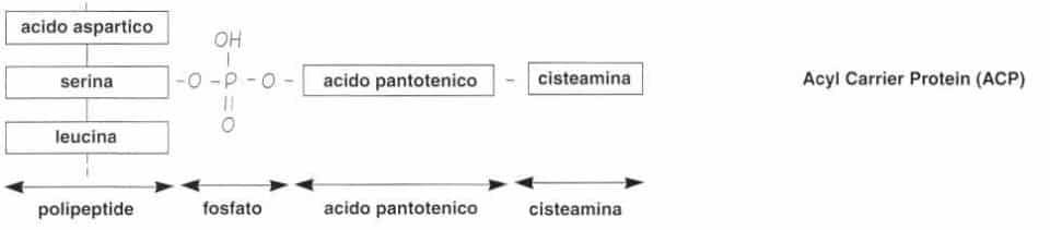 Vitamina B5 o Acido Pantotenico: reazione 4
