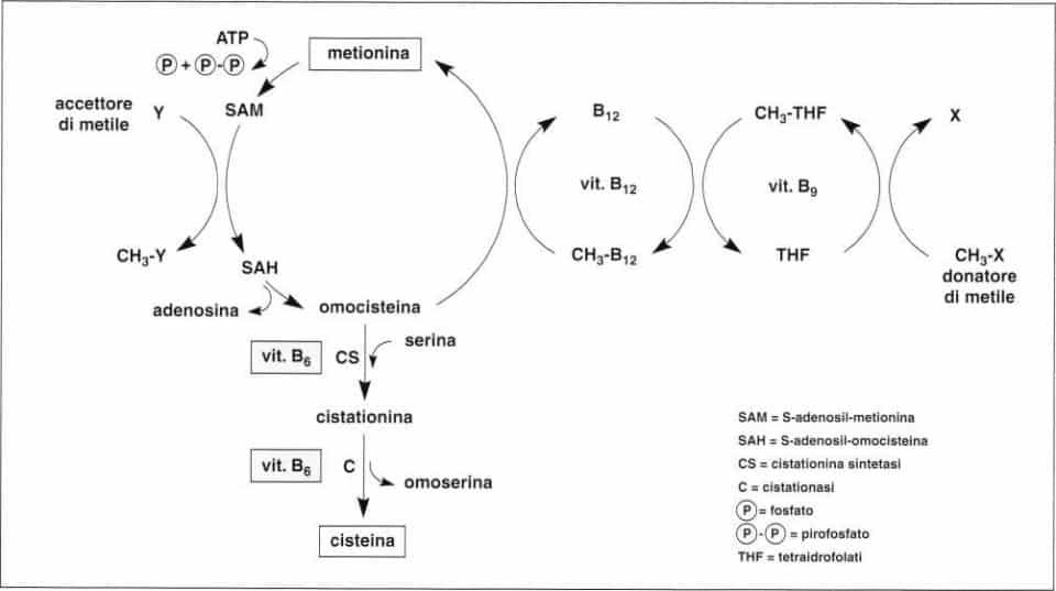 Vitamina B6 o Piridossina: reazione 21