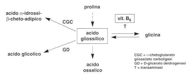 Vitamina B6 o Piridossina: acido glicossilico