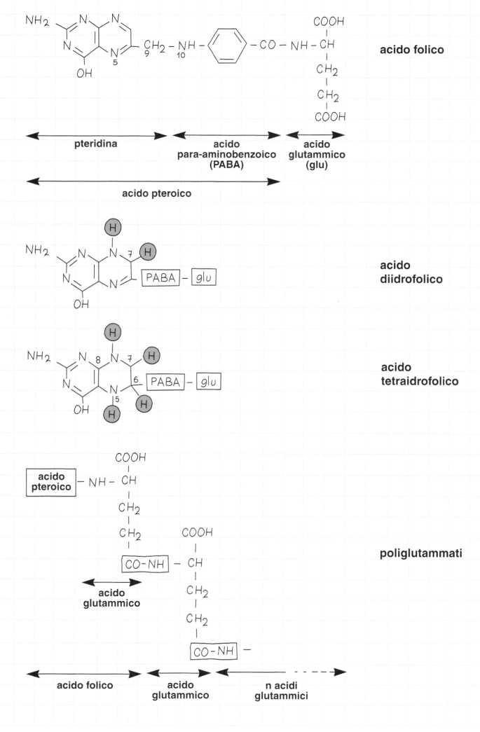 Vitamina B9 o Acido Folico: formule di struttura