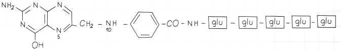 Vitamina B9 o Acido Folico: pentaglutammati