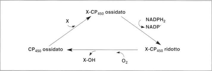 Vitamina C (Acido Ascorbico): reazione 19