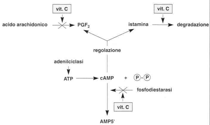 Vitamina C (Acido Ascorbico): reazione 21