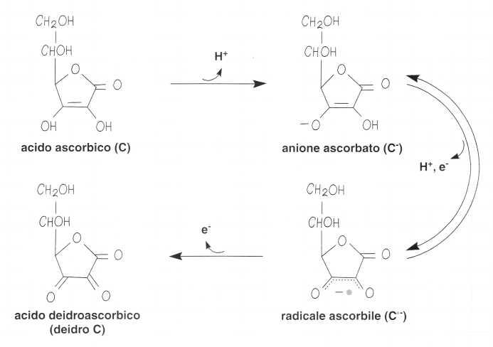 Vitamina C (Acido Ascorbico): reazione 4