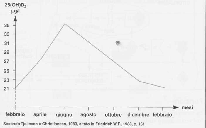 Vitamina D (Calciferolo): concentrazione ematica in rapporto ai mesi dell'anno
