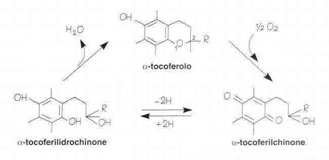 Vitamina E (Tocoferolo): reazione 10