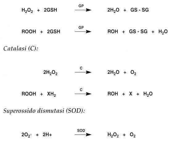 Vitamina E (Tocoferolo): reazione 14