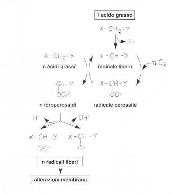 Vitamina E (Tocoferolo): reazione 9