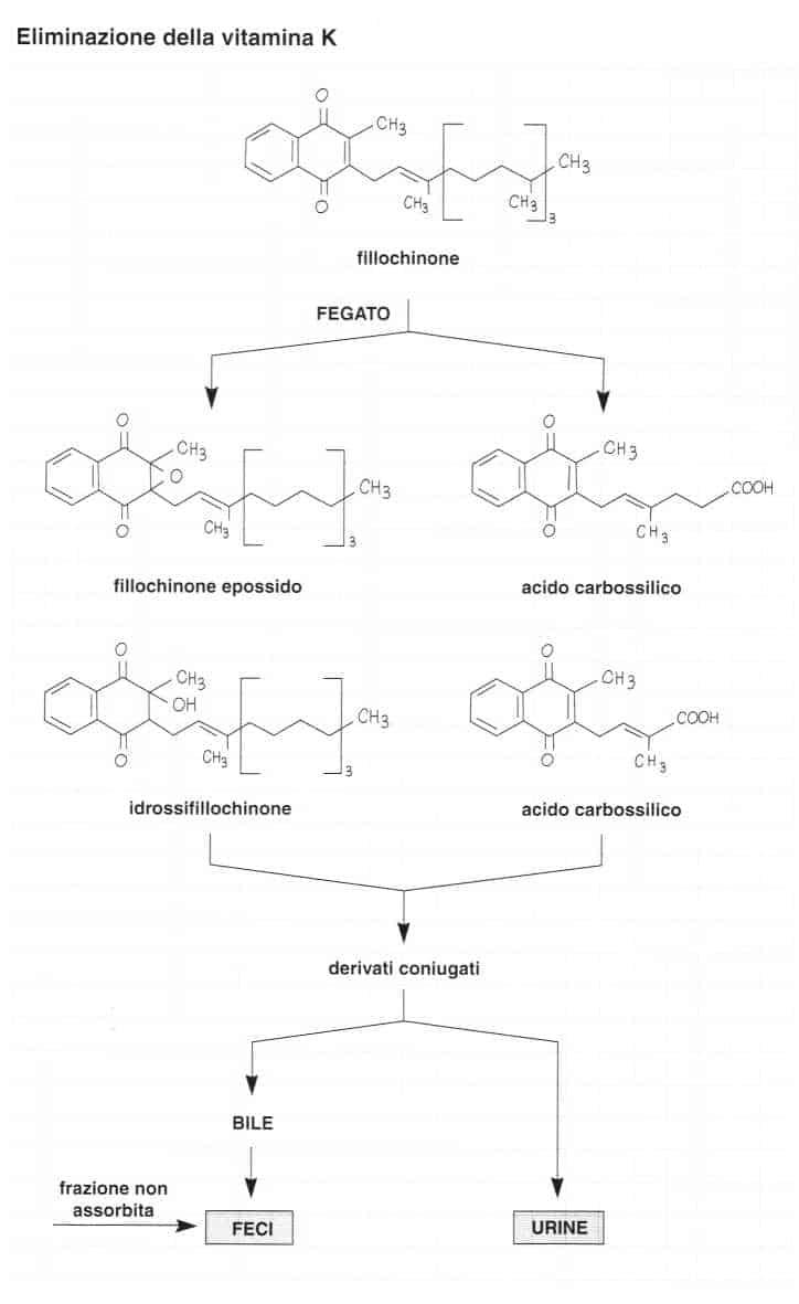 Vitamina K (Fillochinone): eliminazione
