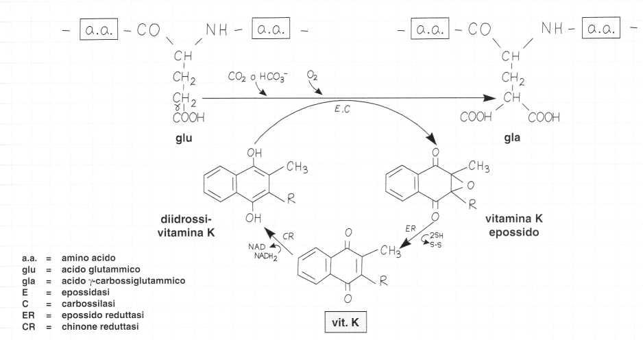 Vitamina K (Fillochinone): reazione 6