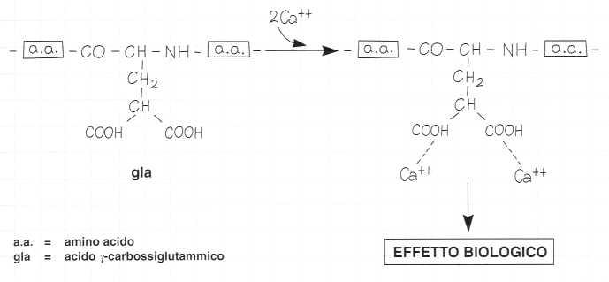 Vitamina K (Fillochinone): reazione 7