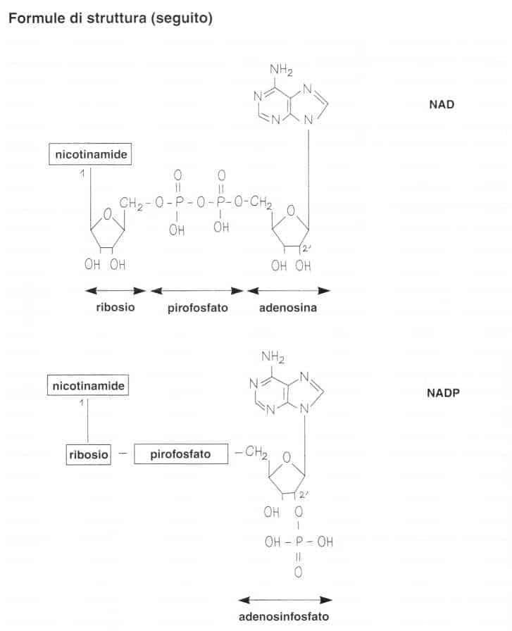 Vitamina PP (Niacina): formule di struttura