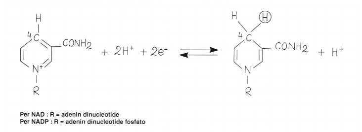 Vitamina PP (Niacina): reazione 9