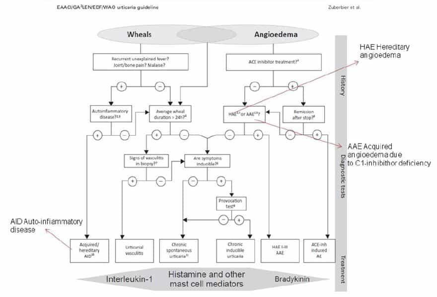 orticaria: algoritmo diagnostico