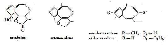 assenzio Figura 2