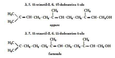 balsamotolu Figura 1