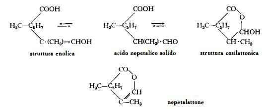 cataria Figura 1