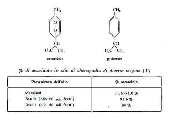 chenopodio Figura 1