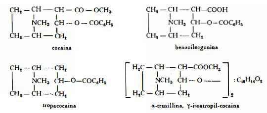 coca Figura 1