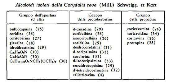 coridale Figura 1