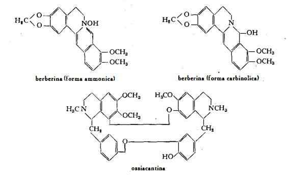 crespino Figura 1