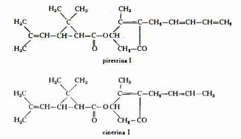crisantemo Figura 1