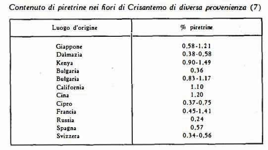crisantemo Figura 3