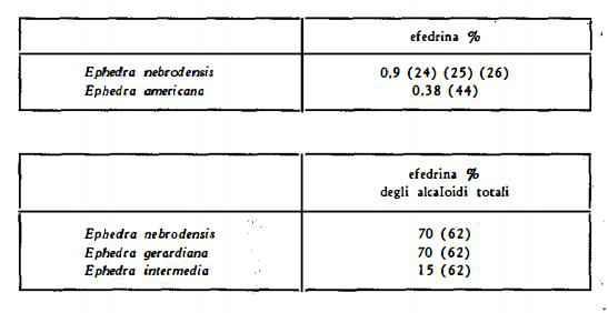 efedra Figura 4
