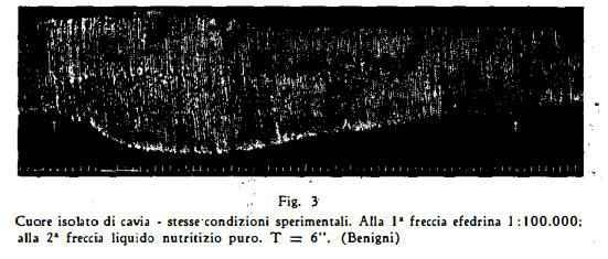 efedra Figura 7