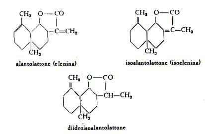 enula Figura 1