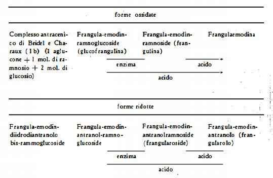 frangola Figura 4