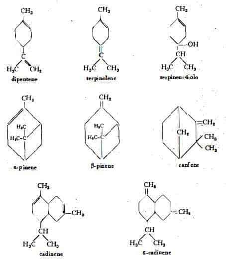ginepro Figura 1