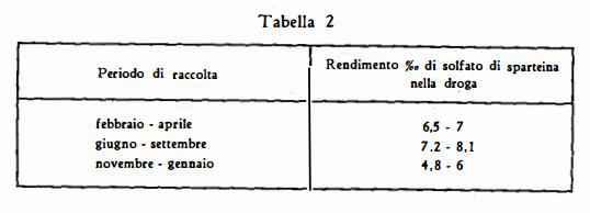 ginestra Figura 4