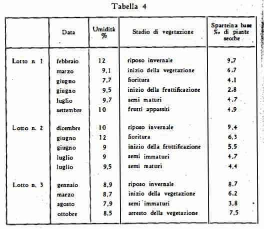 ginestra Figura 6