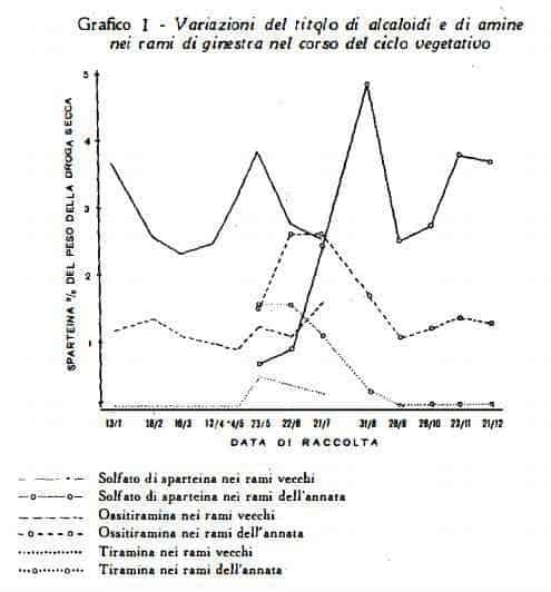 ginestra Figura 7
