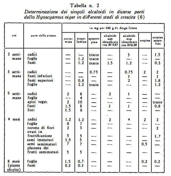 giusquiamo Figura 7