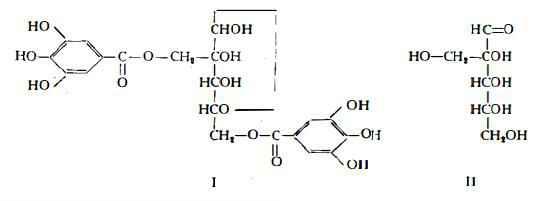 hamamelide Figura 1