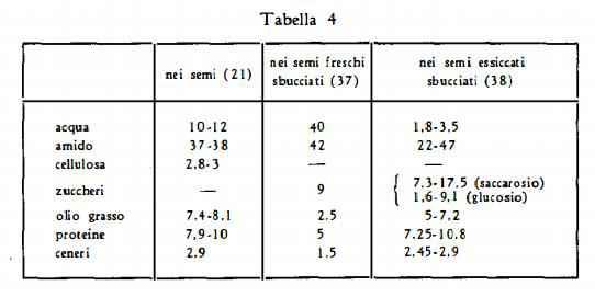 ippocastano Figura 5