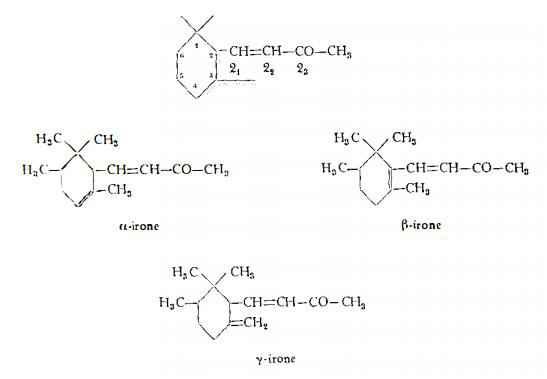 iridefiorentina Figura 1