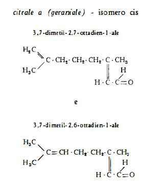 limone Figura 1