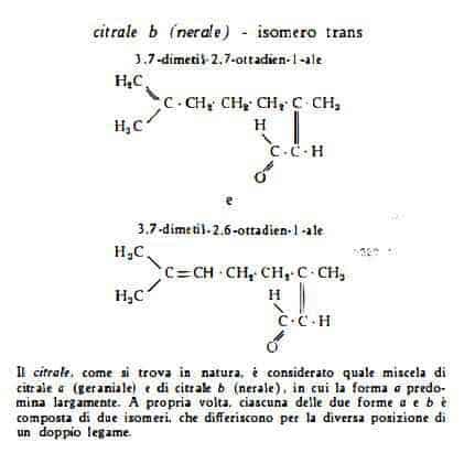 limone Figura 2